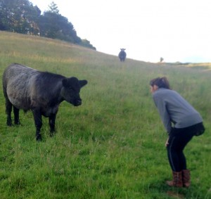 Jaguar CEO Lisa Conte with a Blue Grey cow at the Clayton Family Farm in Devon, UK