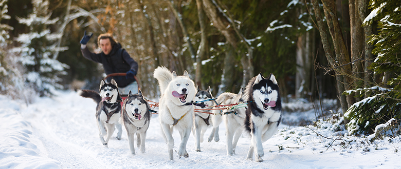 Sled Dog Evolution